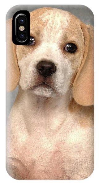 Lemon Beagle Puppy IPhone Case