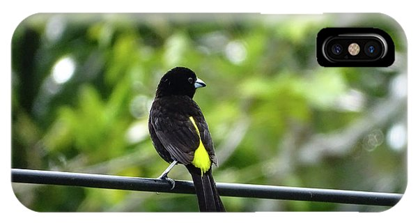 Lemon-rumped Tanager IPhone Case