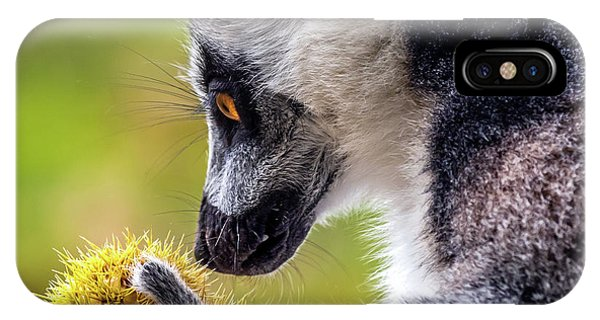 Lemur And Sweet Chestnut IPhone Case