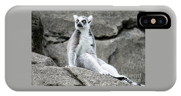 Lemur The Cutie IPhone Case