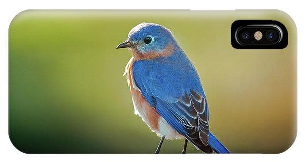 Lenore's Bluebird IPhone Case