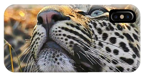 Leopard Aloft IPhone Case