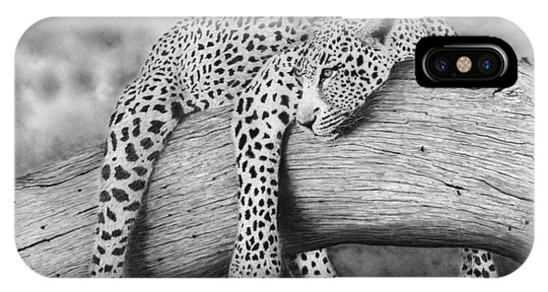 Hyper Realism iPhone Case - Leopard Relaxing In A Tree by James Schultz