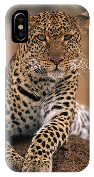 Npl iPhone Case - Leopard Panthera Pardus, Masai Mara by Anup Shah