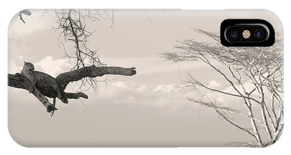 Leopard Resting On A Tree IPhone Case