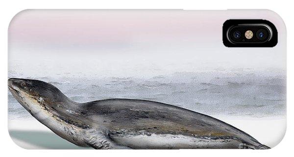 Leopard Seal Hydrurga Leptonyx - Marine Mammal - Seeleopard IPhone Case