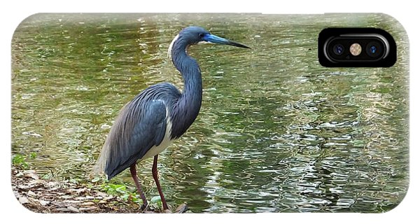 Lesser Blue Heron In Mating Plumage IPhone Case