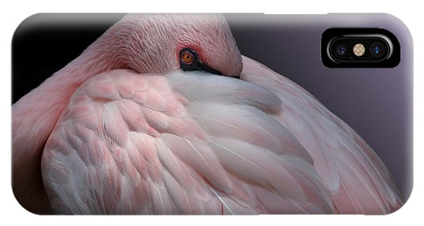 Lesser Flamingo Resting IPhone Case