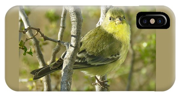 Lesser Goldfinch 1 IPhone Case