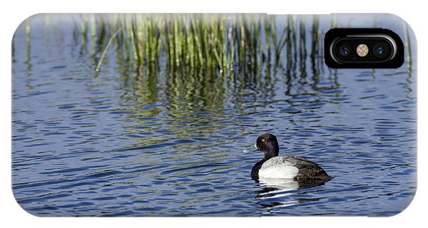 Lesser Scaup Adult Male IPhone Case