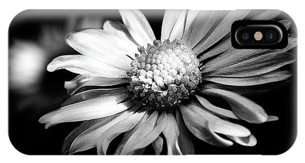 Leucanthemum Adustum IPhone Case
