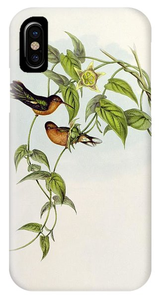 Humming Bird iPhone Case - Leucippus Fallax by John Gould