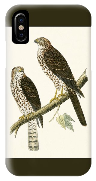 Levant Sparrow Hawk IPhone Case