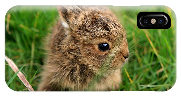 Leveret In The Grass IPhone Case