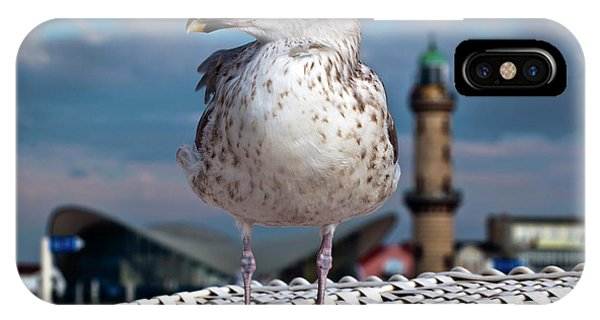 Liberty Of An Pacific Gull IPhone Case
