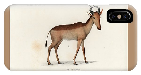 IPhone Case featuring the drawing Lichtenstein's Hartebeest, Alcelaphus Lichtensteinii by J D L Franz Wagner