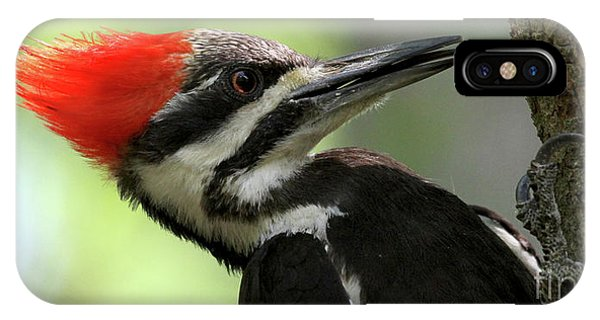 Lick It Up - Pileated Woodpecker IPhone Case