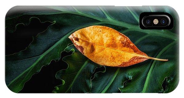 Botany iPhone Case - Life Cycle Still Life by Tom Mc Nemar