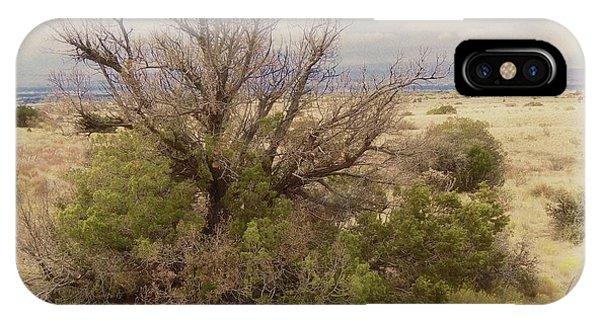 Life Of A High Desert Juniper Pinyon IPhone Case