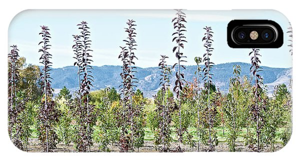 Life On A Tree Farm-foothills View #1 IPhone Case