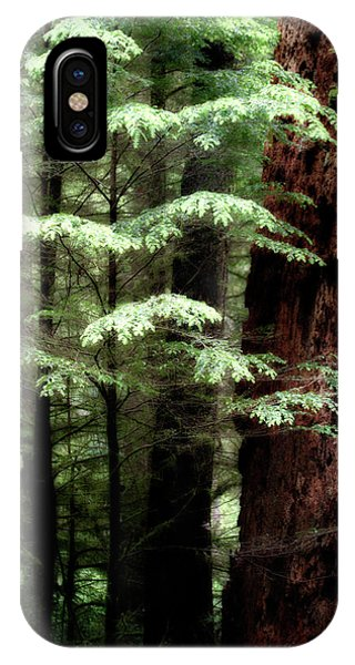 Light On Trees IPhone Case