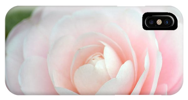 Light Pink Camellia Flower IPhone Case