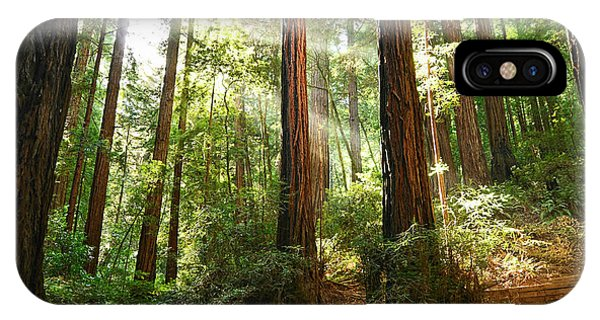 Hiking Path iPhone Case - Light The Way - Redwood Forest Of Muir Woods National Monument With Sun Beam. by Jamie Pham