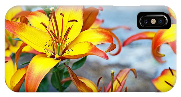 Lilies Of The Field #1 IPhone Case