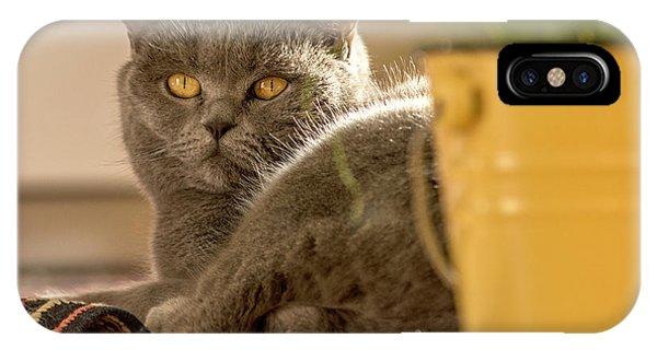 Lilli The Cat IPhone Case