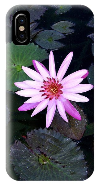 Lilly Pad Phone Case by Rebecca Cozart