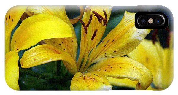 Lillie iPhone Case - Lily by Amanda Barcon