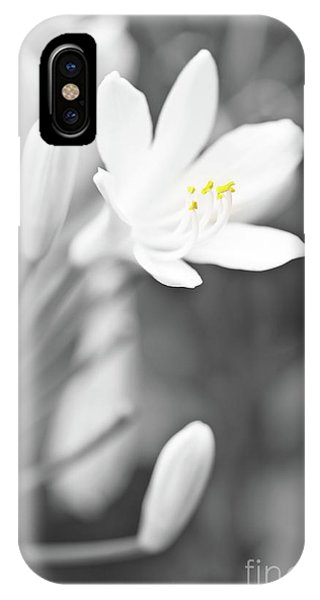 Pistil iPhone Case - Lily Of The Nile by Delphimages Photo Creations