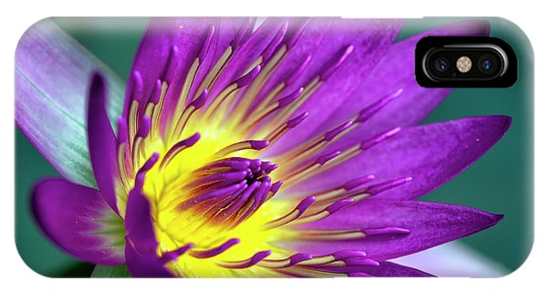 Lily On The Water IPhone Case