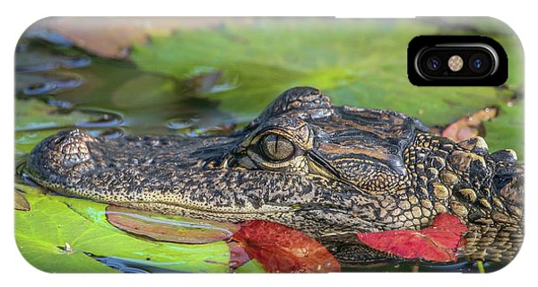 Lily Pad Gator IPhone Case