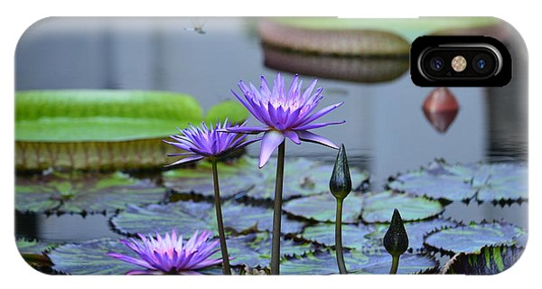 Lily Pond Wonders IPhone Case