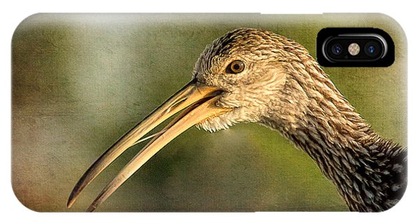 Limpkin 1 IPhone Case