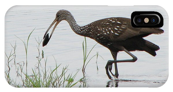 Limpkin With Shellfish IPhone Case