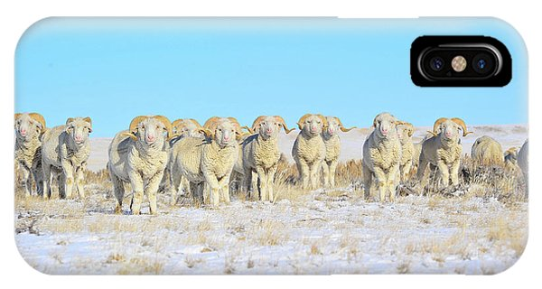 Line Em Up Rams IPhone Case