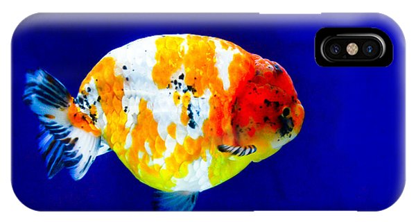 Lion Head Goldfish 3 IPhone Case