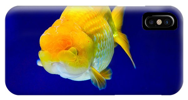 Lion Head Goldfish 5 IPhone Case