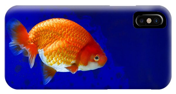 Lion Head Goldfish 6 IPhone Case