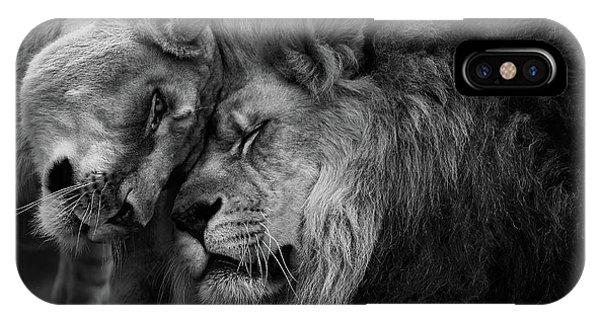 Lion In Love 2 IPhone Case