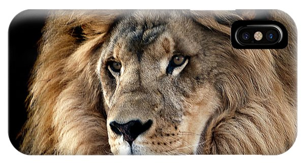 Lion King Of The Jungle 2 IPhone Case