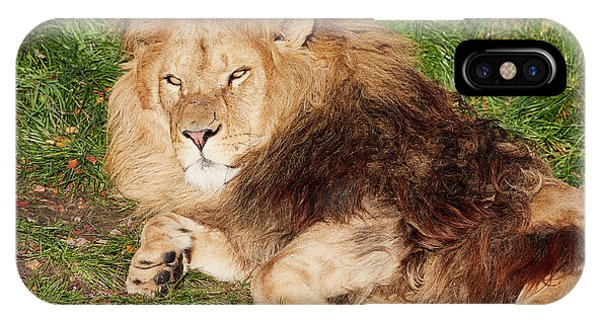 IPhone Case featuring the photograph Lion Resting In The Sun by Nick Biemans