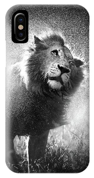 Male iPhone Case - Lion Shaking Off Water by Johan Swanepoel