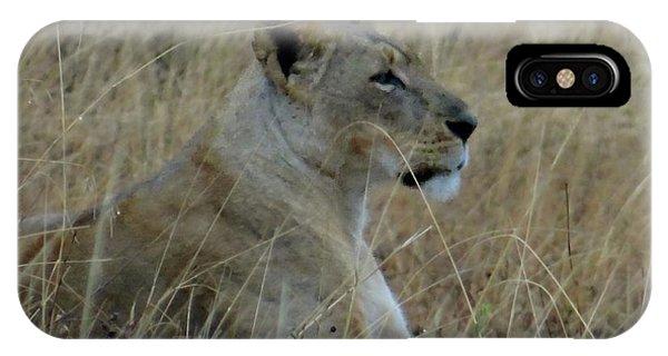 Exploramum iPhone Case - Lioness In The Grass by Exploramum Exploramum