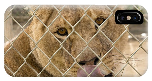 Lioness Licks IPhone Case