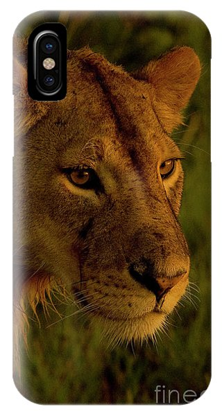 Lioness-signed-#6947 IPhone Case