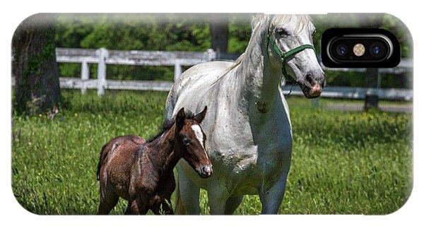 Lipizzan Horses IPhone Case