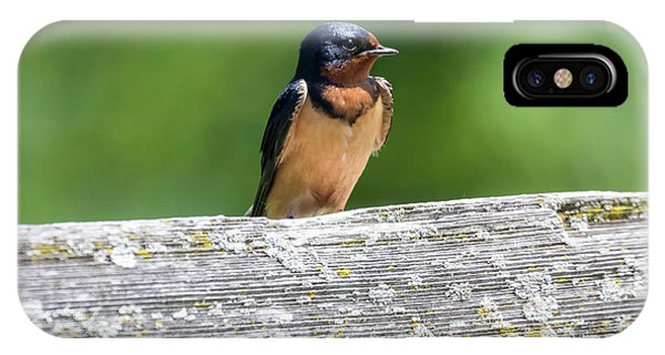 IPhone Case featuring the photograph Little Barn Swallow by Ricky L Jones